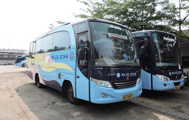 sewa bus pariwisata blue star medium